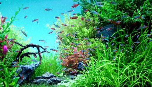テトラ・リビングキューブで熱帯魚飼育に初挑戦!初心者でも簡単?感想・評価
