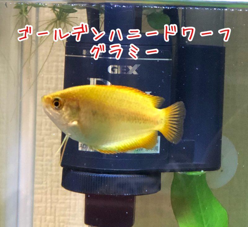 2本の触覚を使ってコミュニケーションを取る姿が可愛い魚です