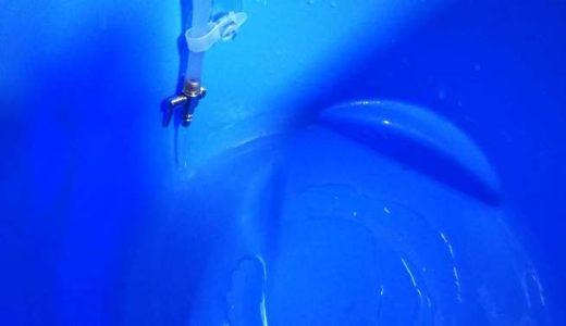 稚魚水槽の水換えについて~ミクロラスボラハナビ稚魚の育成記録
