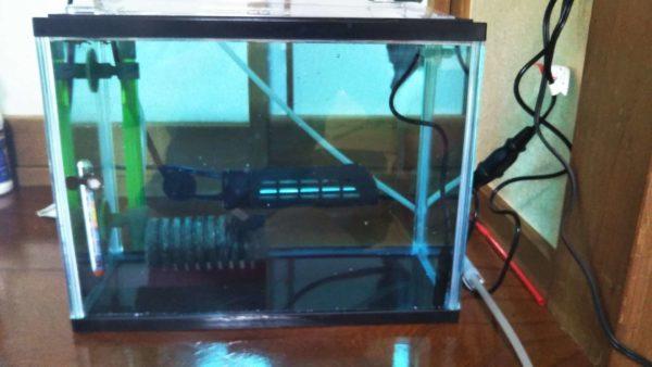 グラミー 稚魚水槽